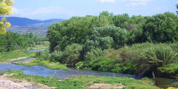 Оливковое масло монастырское Pantanassa